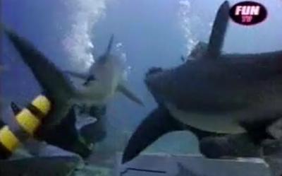Thumbnail Lorenzo sur Fun Radio avec les requins